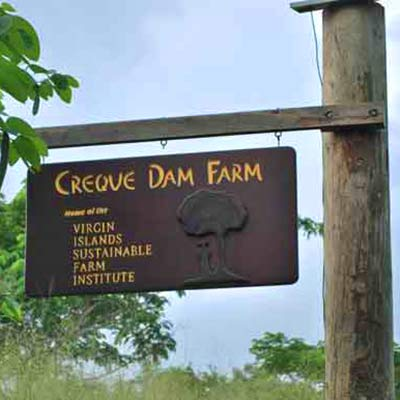 Creque Dam Farm in St. Croix's rain forest