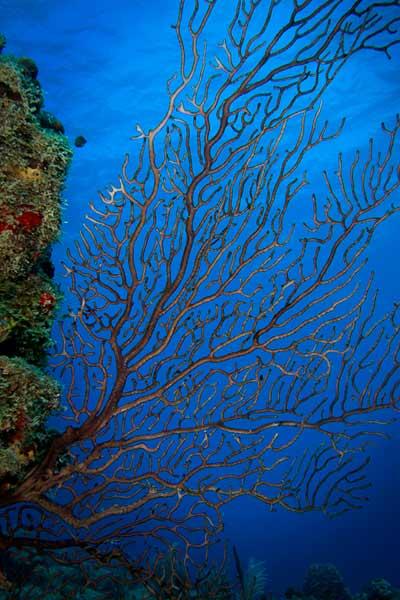 st croix scuba wall diving