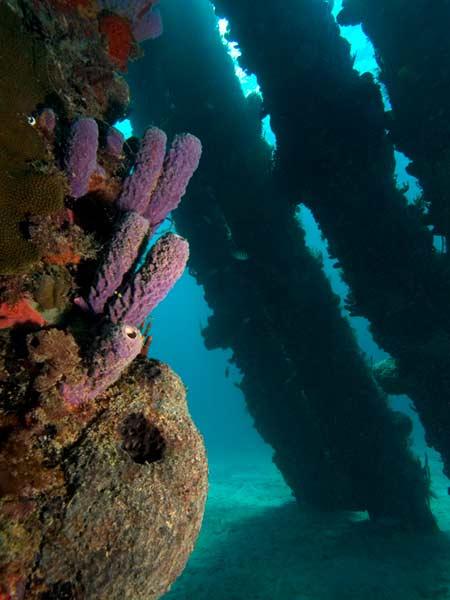 pier diving on st croix