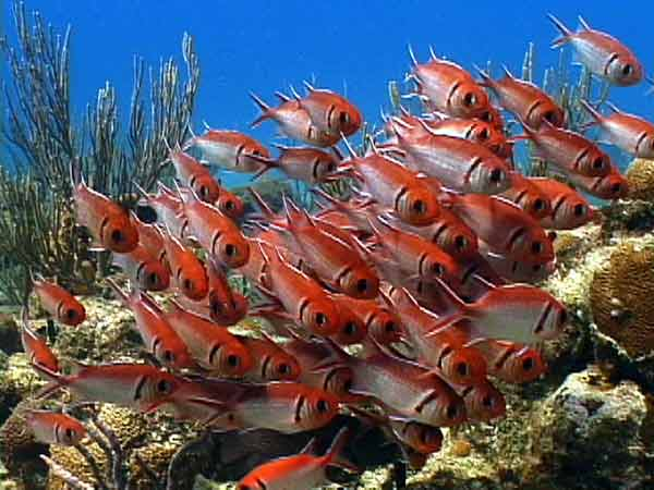 reef fish on st croix